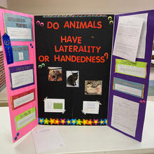 Do Animals Have Laterality or Handedness?