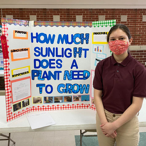 How Much Sunlight Does a Plant Need to Grow?