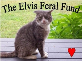 257_Elvis.jpg
