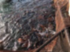 乙女鯛1.jpg