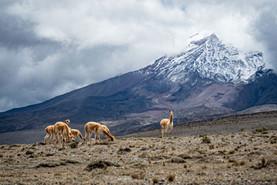 Ecuador-1200x800-5.jpg