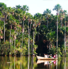 Puerto Maldonado - Jungle Lodge-1.jpg