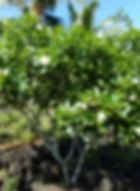 DSCN0259_edited.jpg