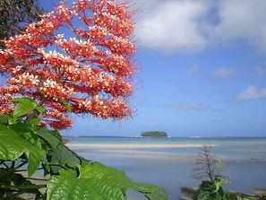Flower and the island.jpg
