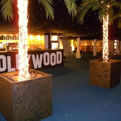 Lit up Palm Trees - Hollywood Boulavard