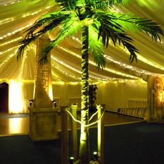 Obelisk & Palm Tree