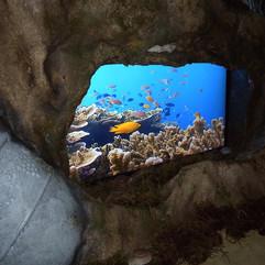 Virtual Aquarium - Lost City Of Atlantis Event Theming