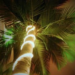 Lit Palm Tree.jpg