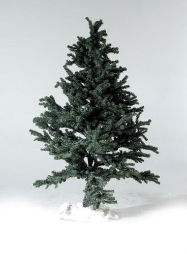 1-879-Fir tree2.jpg
