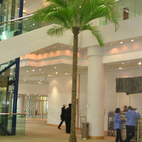 6m Palm Tree