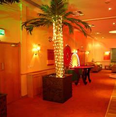 Boulevard Palm Trees