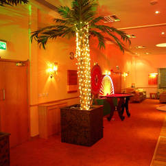 Palm Tree Hire - Themes Events