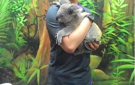 EET 學員和澳洲無尾熊