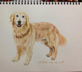 EET 學員 Nia 畫作- 黃金獵犬