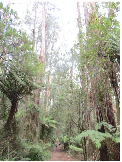 澳洲森林遊樂區