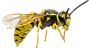 Yellow Jacket-736x400.png