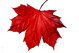 A Red Canadian Mple Leaf