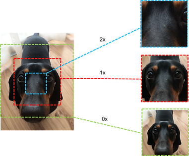 image of a dog being edited with NVIDIA Jetson GstPTZR plugin