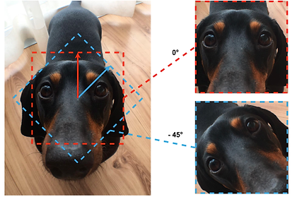 image of a dog being edited within SyncSnap