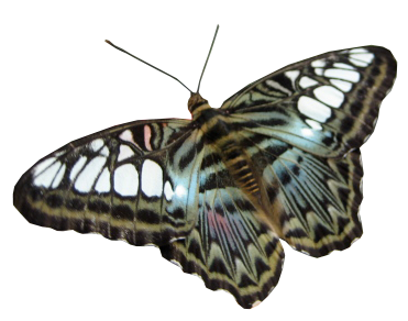 butterfly cut out 2.png