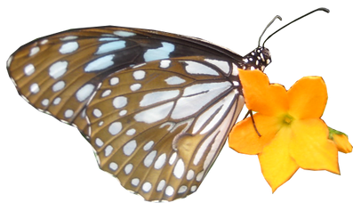butterfly cut out 3.png