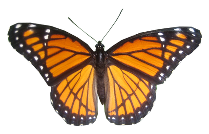 butterfly cut out 4.png