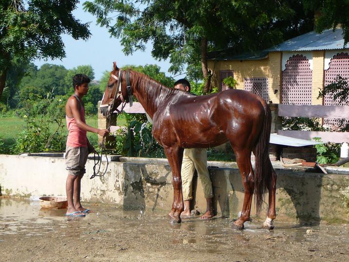 Horse Heritage Narlai