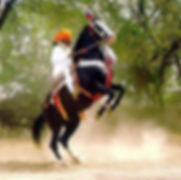 Lgendary Marwari Stallion Alibaba and Rao Jodh Singh