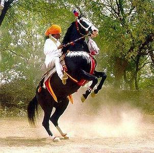 Lgendary Marwari Stallion Alibaba and Rao Jodh Singh