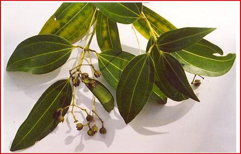 Cinnamon Leaf Essential Oil 15 mL