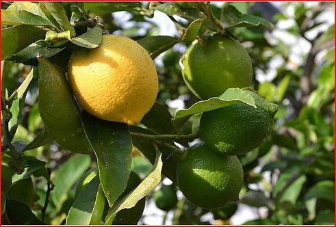 Lemon Essential Oil 15 mL