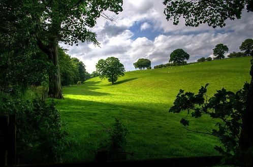 """Collina Verde"" Aromatherapy Blend © 2oz"