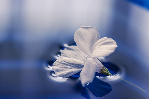 """Tranquility"" Aromatherapy Blend © 2oz"
