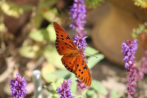 """Spring Meadow"" Aromatherapy Blend ©  2oz."