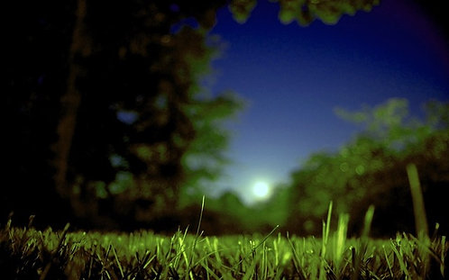 """Midsummer's Night"" Aromatherapy Blend © 2oz."