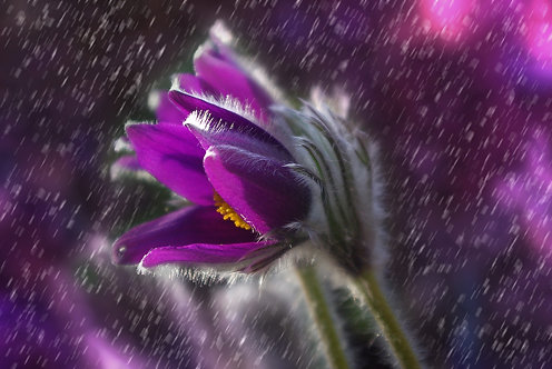 """""""Rain"""" Aromatherapy Blend © 2oz"""