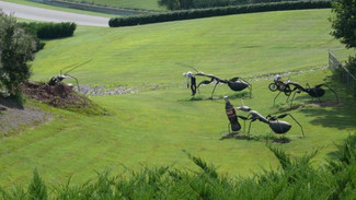 Giant Ant Sculptures