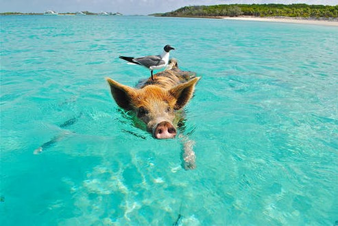 Staniel Cay Swimming