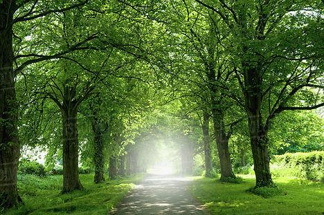 summer trees.jpg