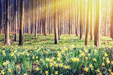 38203627-spring-forest-covered-by-yellow