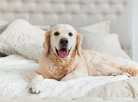 Dog_In_bed_775x515.jpg