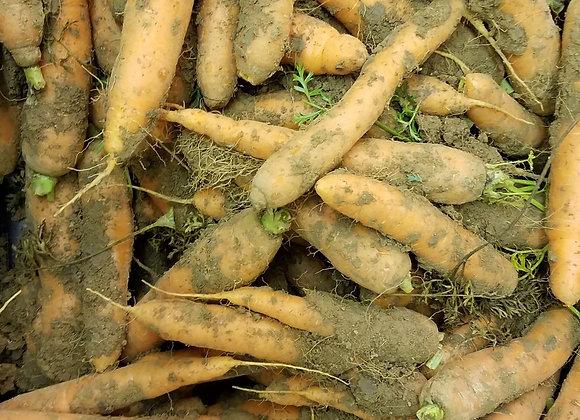 1kg de carottes (non lavées)