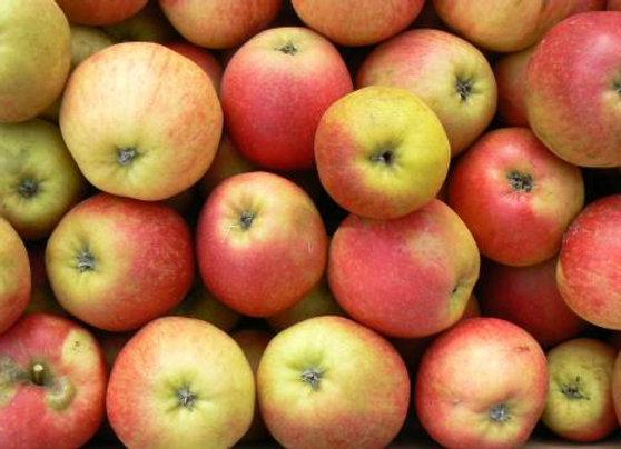 1kg de pommes Delbard Jubilé