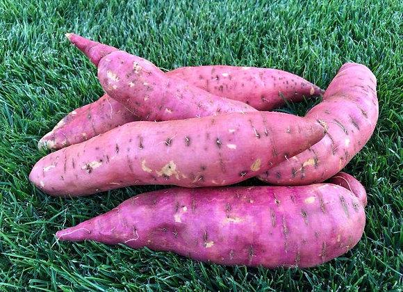 1kg de patates douces blanches