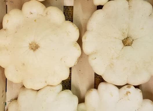Patisson blanc
