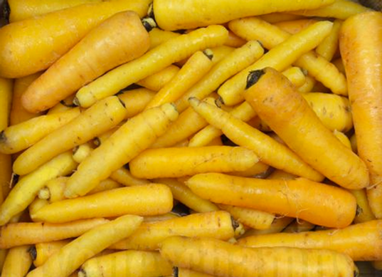 1kg de carottes jaunes BIO