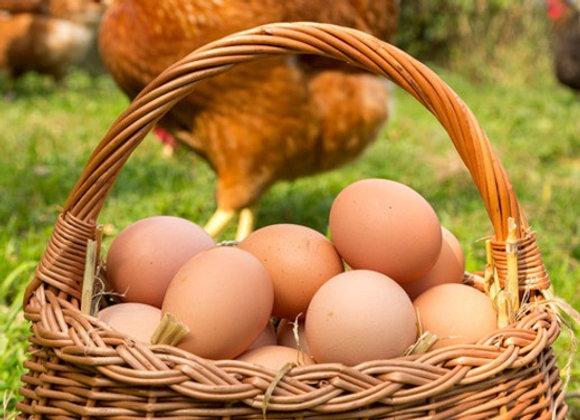 Boite de 6 œufs plein air