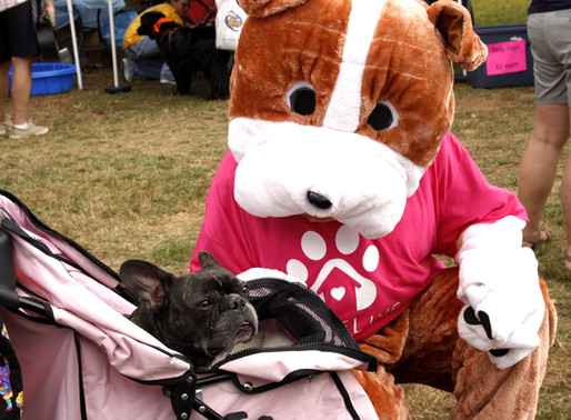 Chester Dog Fair - WHAT A GREAT WEEKEND!