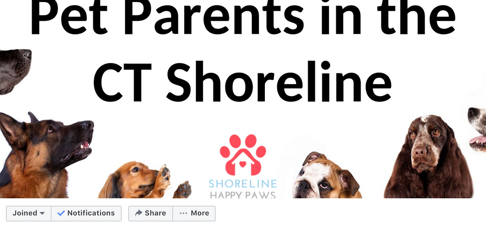 pet sitter, community, Connecticut, deep river, essex, old saybrook