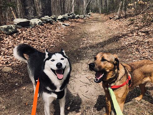 dog hiking and walking pet sitting